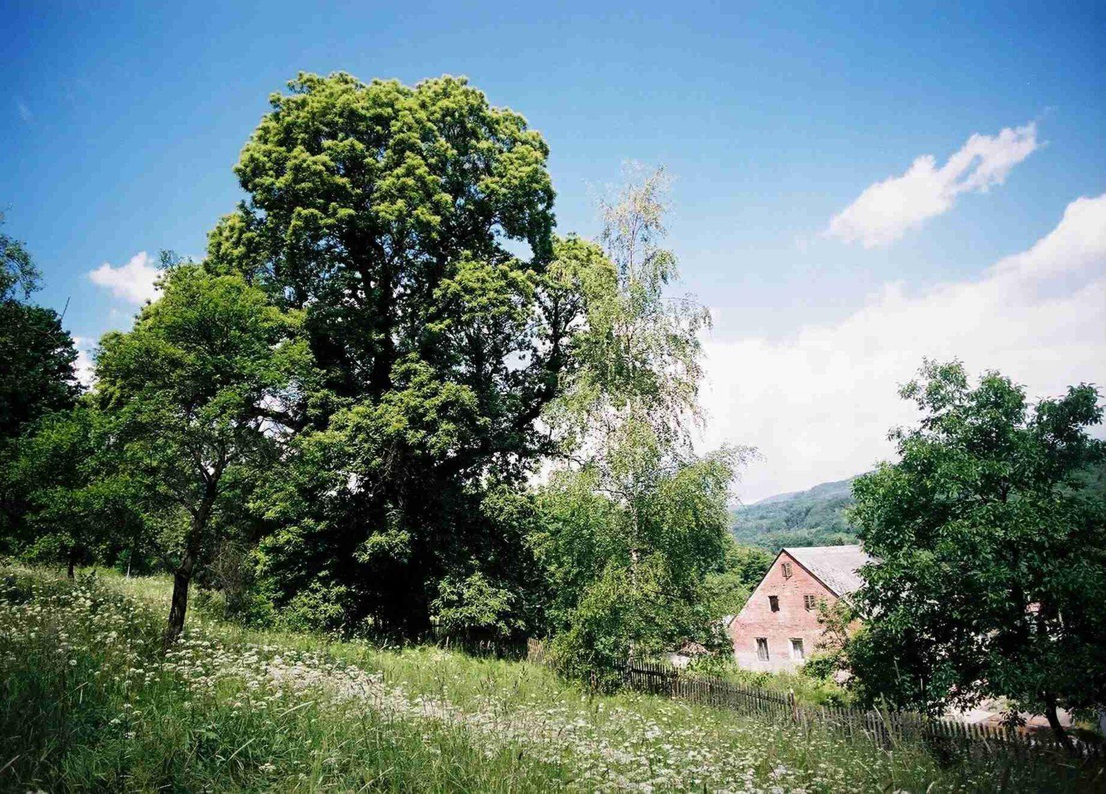 6-Kastanovnik-z-Doupovskych-hor-(1).jpg