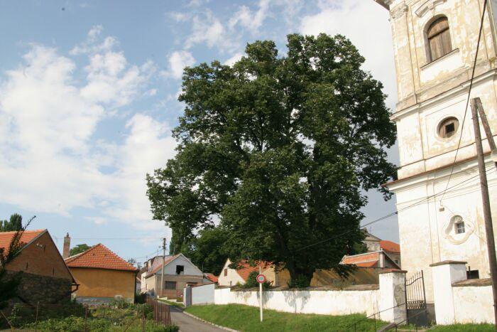 11-Lipa-Marinka-v-Hrabovanech-(1).jpg
