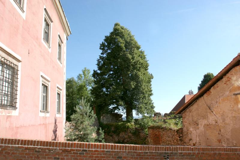 1-Lipa-u-hradu-Sadek-(1).jpg
