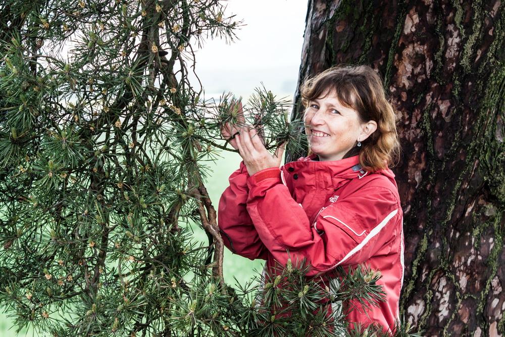 Smirci-borovice3.jpg